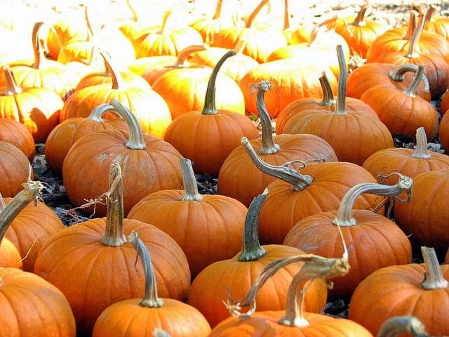 Celebrate the Arrival of Autumn at the Midtown Village Fall Festival