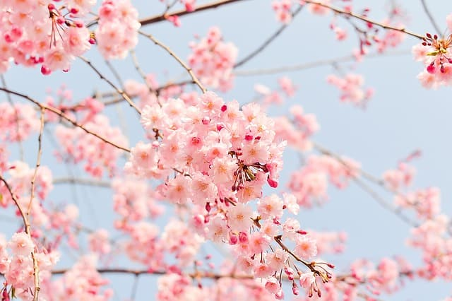 Celebrate Spring at The Subaru Cherry Blossom Festival of Greater Philadelphia From April 7-15