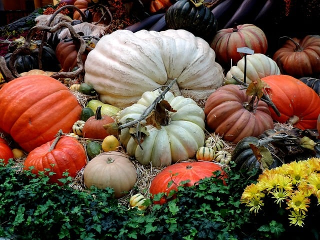 The Annual Midtown Village Fall Festival Returns Oct. 5!